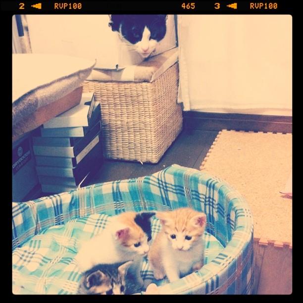 カツヲと子猫たち